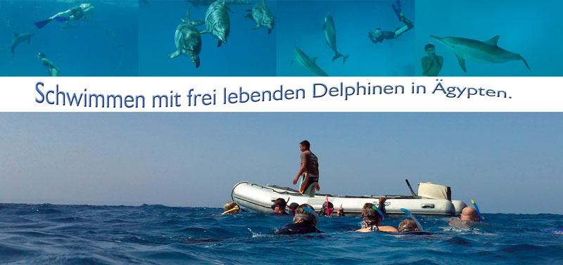 delphinreise2012